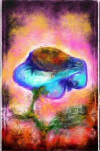 Cornflower Ignition