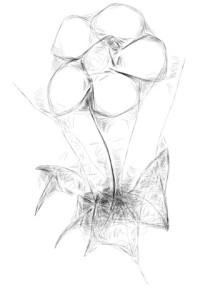 Webbed Petunia